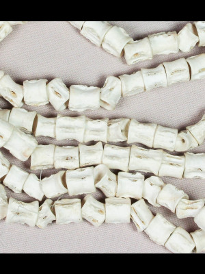 115 perles vertèbres de poisson